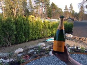 Thuja Champagne